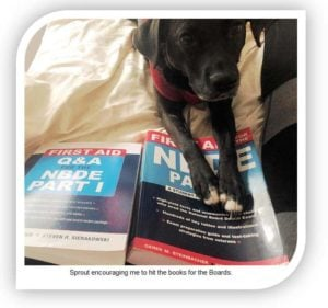 Dog pawing a board exam book. River Oak Dental Palm Bay Fl.